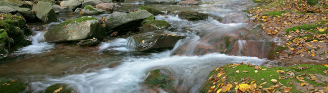A rugged Catskill Stream