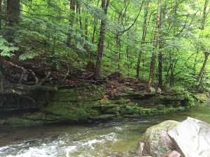 Neversink River - Bedrock wall