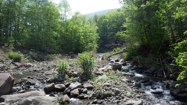 Stony Clove Creek near Wright Road looking upstream before steam restoration.