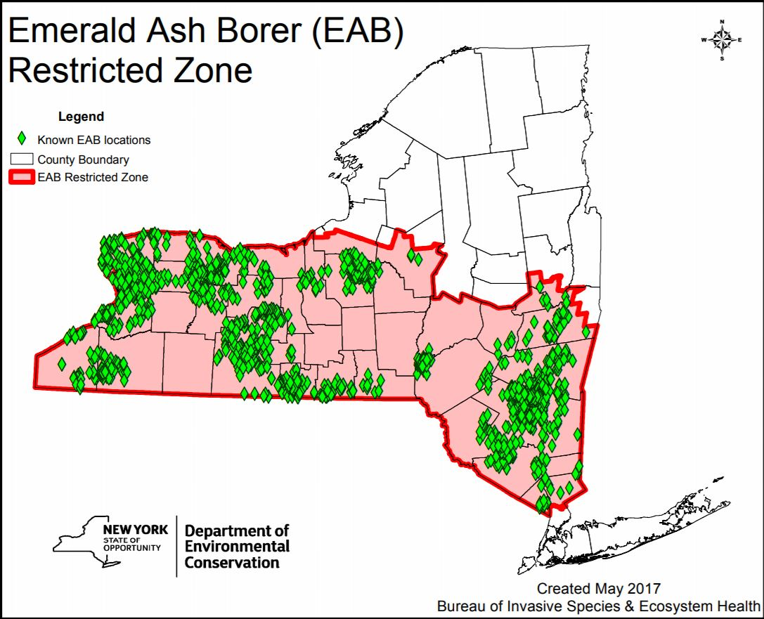 Emerald Ash Borer | Ashokan Streams on map of forest fires, map of ambergris, map of bay village, map of log country cove,