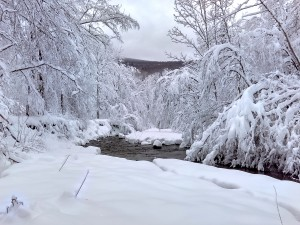 Catskill Stream in Winter