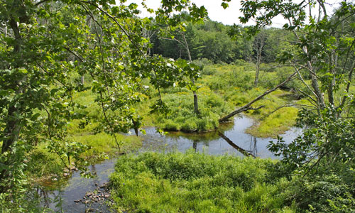 View of the Little Beaverkill, wetlands section