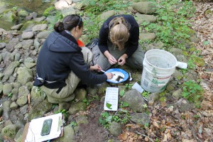 Tiffany Runge, Watershed Technician (left), and Allison Lent, Stream Assessment Coordinator (right), of the Ulster County Soil and Water Conservation District sorting through leaf litter for macroinvertebrate sampling on the banks of Woodland Creek.