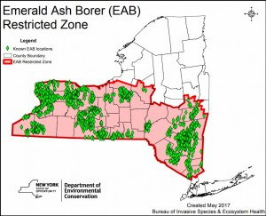 Map of Emerald Ash Borer Locations. courtesy of NYS DEC