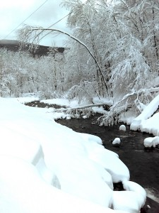 Trees interacting with power lines over the upper Esopus Creek, Oliverea, NY, following the Nor'easter of March 2, 2108. Photo by A. Bennett.