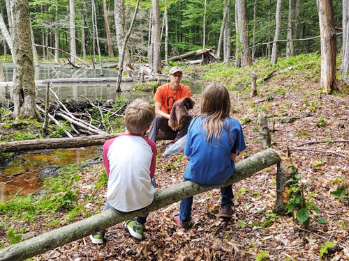 Kids look at a beaver pelt and pond during a forest hike